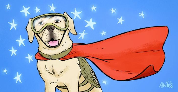 perros, hombres, compañía, ayuda, rescate, terapia.