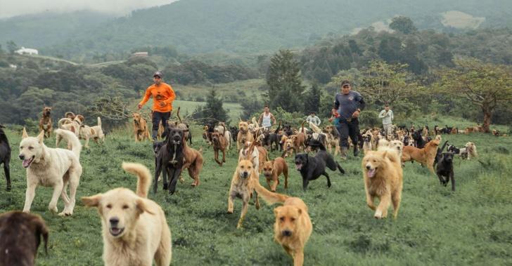 perros, costa rica, zaguates, adopción, cuidado, amor.