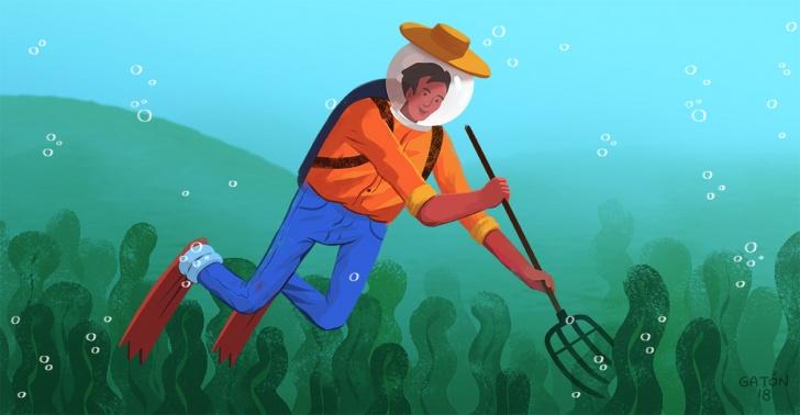 algas, granjas de algas, agricultura bajo el mar,