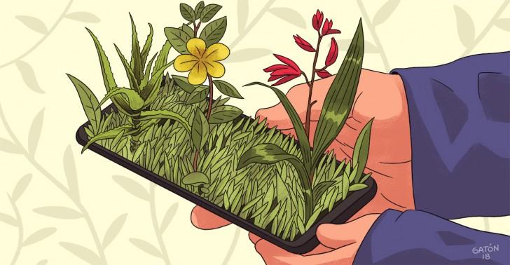 fauna, naturaleza, huerto, plantas, sustentabilidad, ecología, apps, celular, tecnología