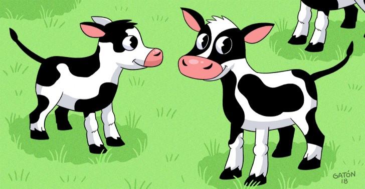 industria ganadera, vacas, terneros, innovación, bayer, phage technologies, bacterias, antibiotico