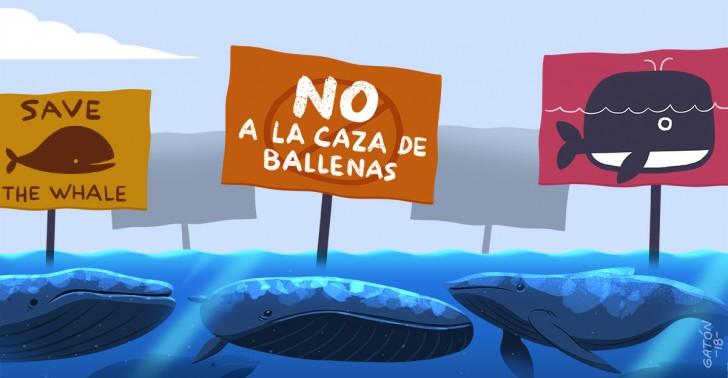 ballenas, caza, santuario, balleneras, conservación