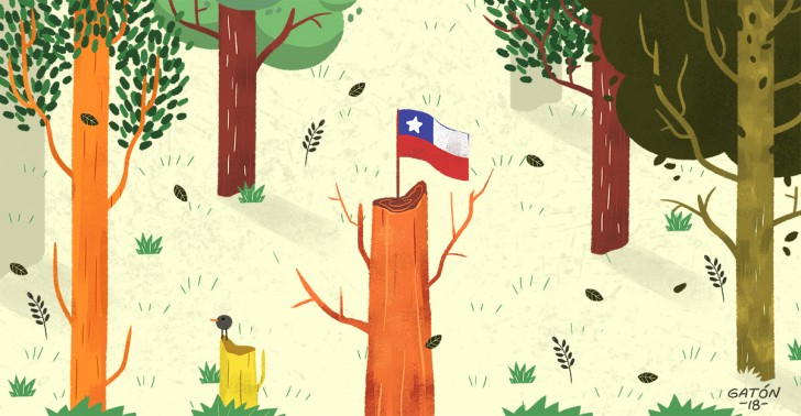 forestación, árboles, bosques, medioambiente