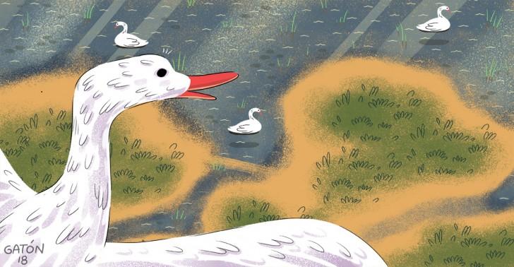 aves, ecosistema, humedal, la ligua, pichicuy, valparaíso, conservación