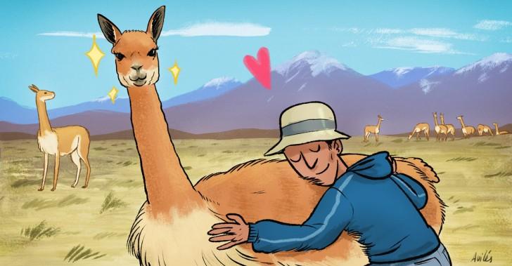 altiplano, convenio, chile, lana, perú, protección, vicuña,