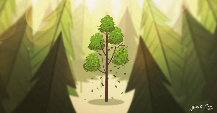 ruil, árbol, peligro de extinción, especie endémica, bosque