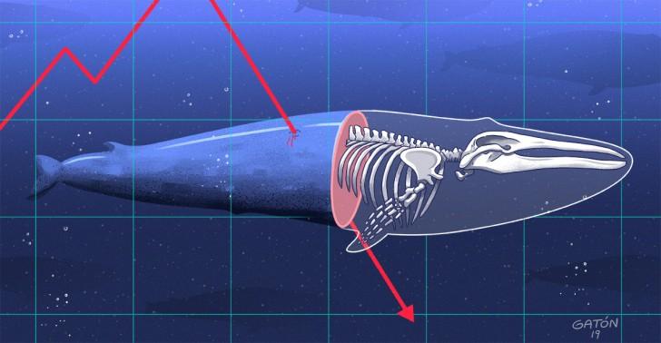 ballenas, caza de ballenas, japón, comisión ballenera internacional