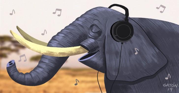 animales, música, ciencia, estudios, gatos, elefantes, monos