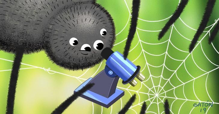 arañas, medicina, tecnología, salud, ciencia, biología, seda, veneno, animales