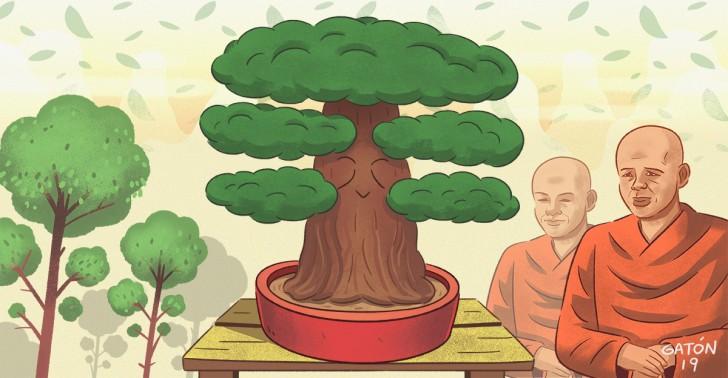 árbol, bonsái, tradición, japón, china