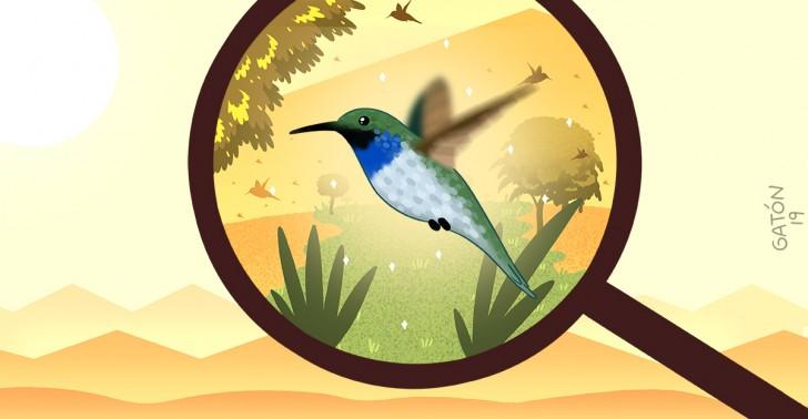 aves, picaflor, colibrí, chile, arica, peligro de extinción, monumento natural