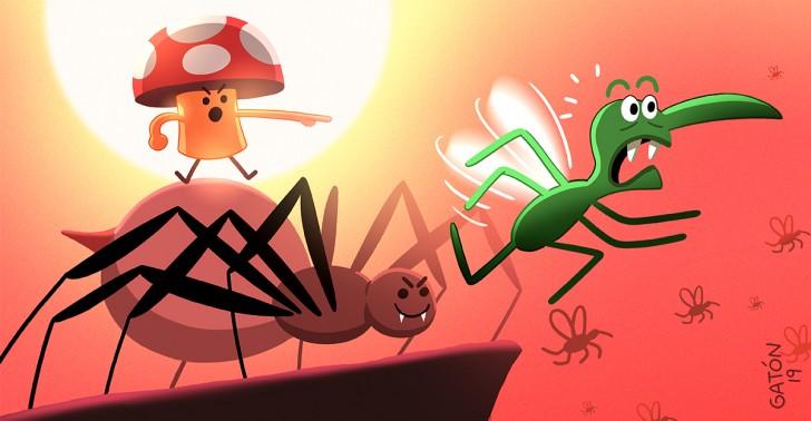 Malaria, Hongos, Arañas, Modificación Genética, Universidad de Maryland, Burkina Faso, Anopheles