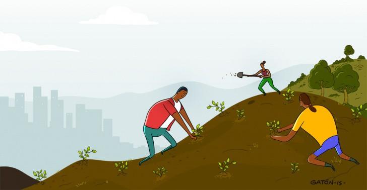 etiopía, áfrica, forestación, crisis ambiental, cambio climático, conflicto político, árboles, deforestación